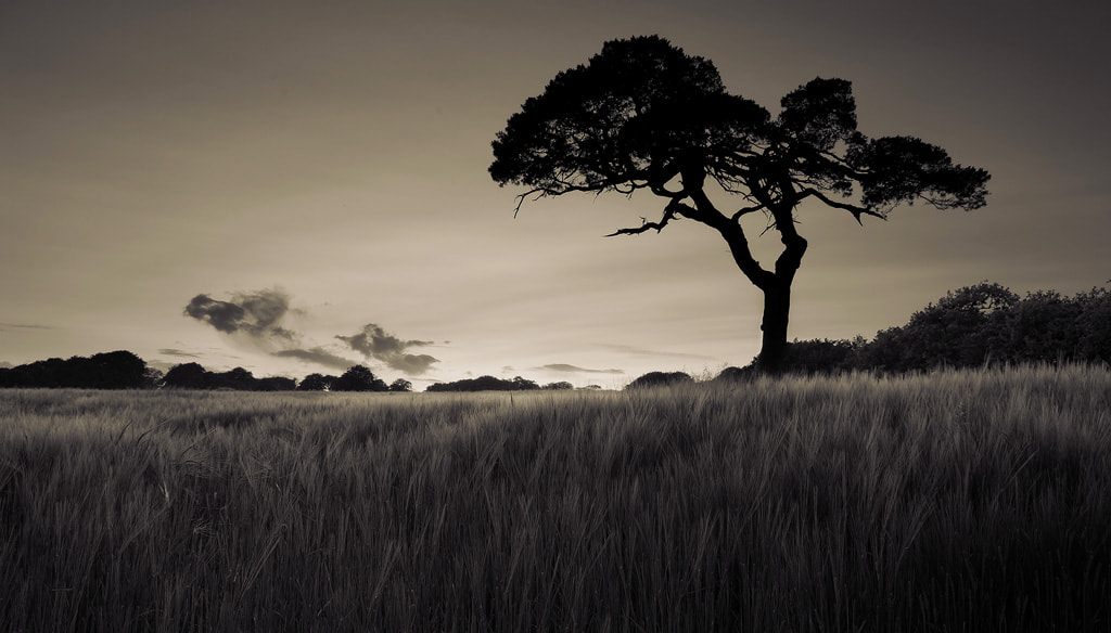 Photograph Lone Tree by Conal Thomson on 500px