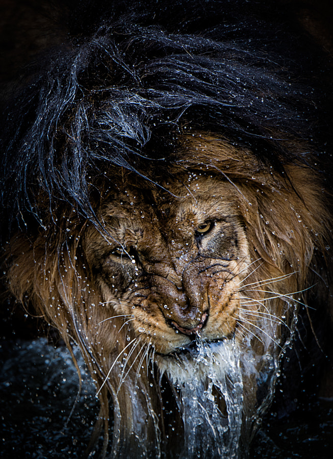 Thousand-yard Stare by Eric Esterle on 500px.com