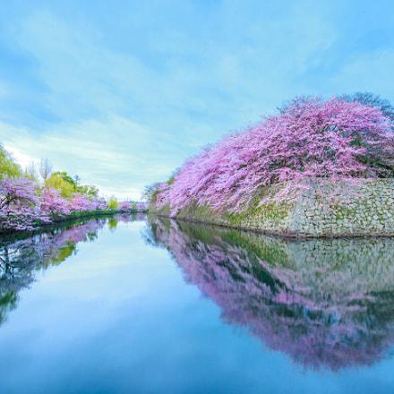water moat Sakura