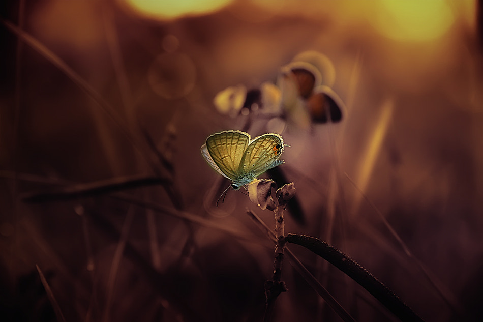 Photograph stand alone by Bagus kusuma on 500px