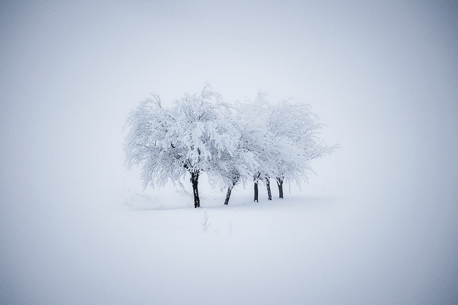 Photograph About Winter by Bogdan Panait on 500px