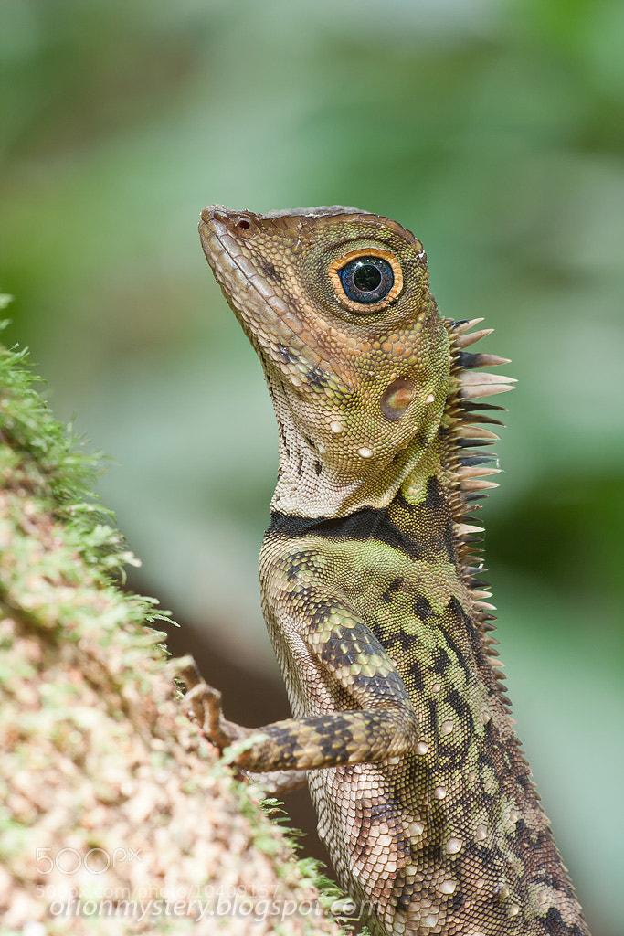 Photograph Lizard portrait by Kurt Orionmystery G on 500px