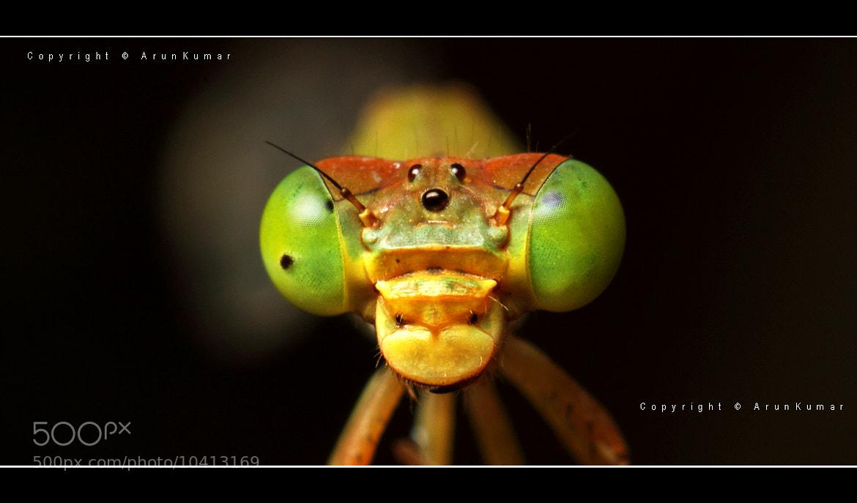 Photograph Damselfly compound eye by Arun Kumar on 500px
