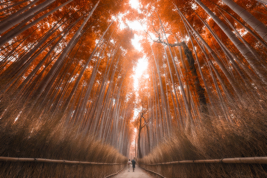 Kyoto Bamboo Forest by Jimmy Mcintyre on 500px.com