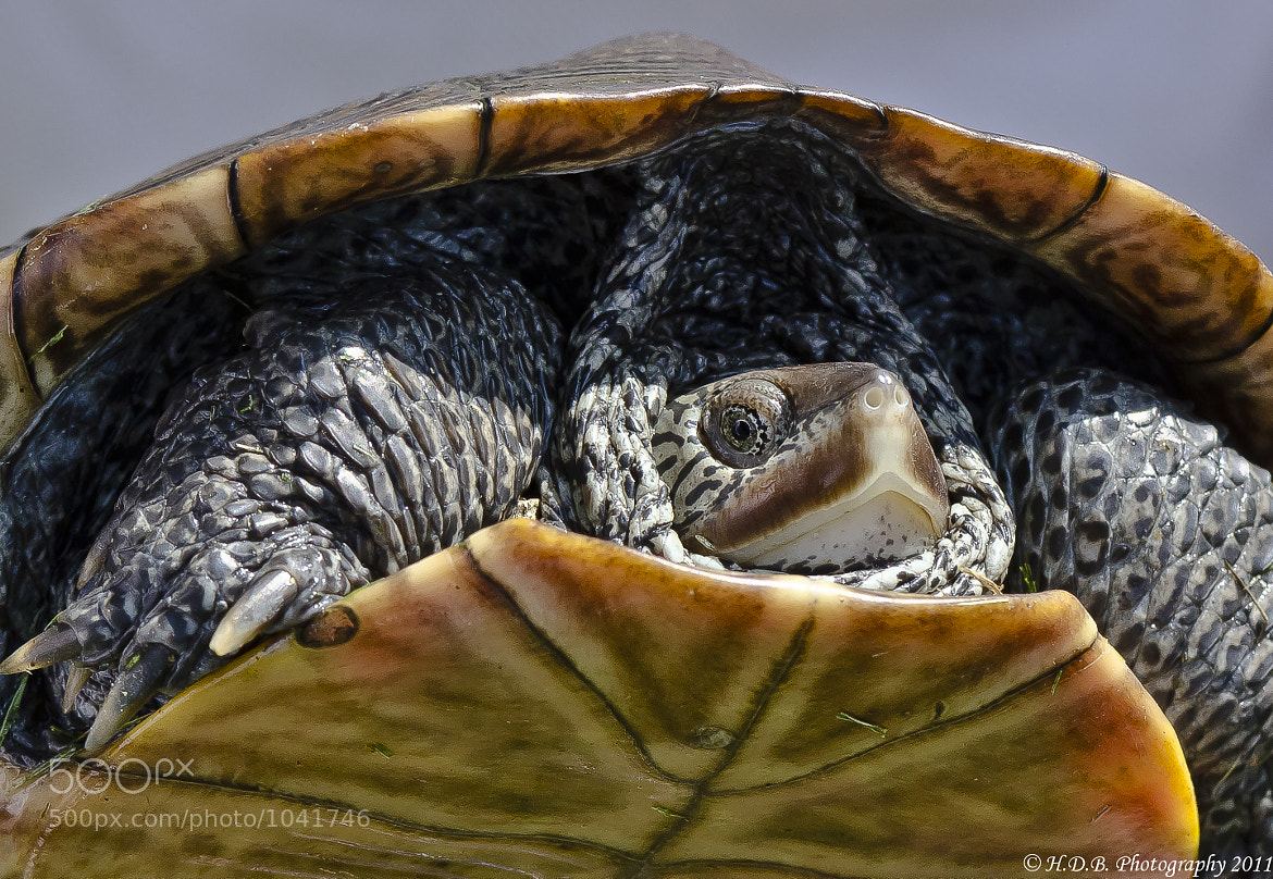 Photograph Coming Out Of My Shell by Harold Begun on 500px