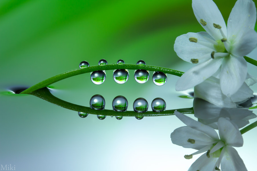 Photograph Droplets of Happiness by Miki Asai on 500px