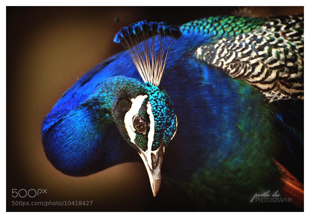 Photograph colourful mood! by Partha Das on 500px