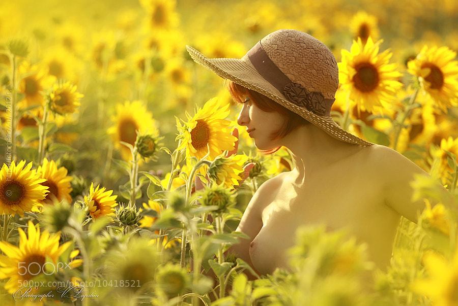 Photograph Sunflower by Vladimir Lapshin on 500px