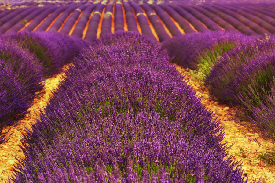 Lavender roads by Ma?gorzata Tymi?ska on 500px.com