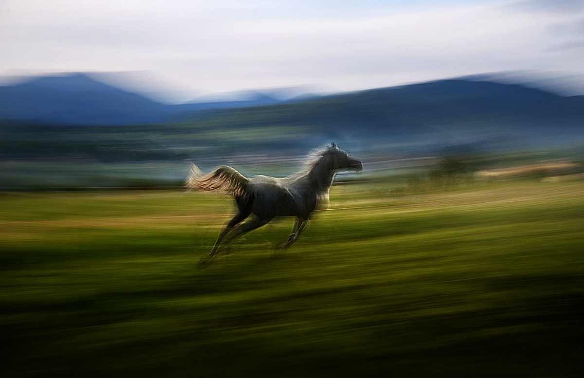 Photograph alone and free by Milan Malovrh on 500px
