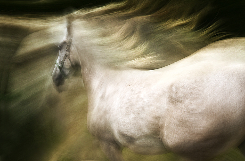 Photograph esata equina by Milan Malovrh on 500px