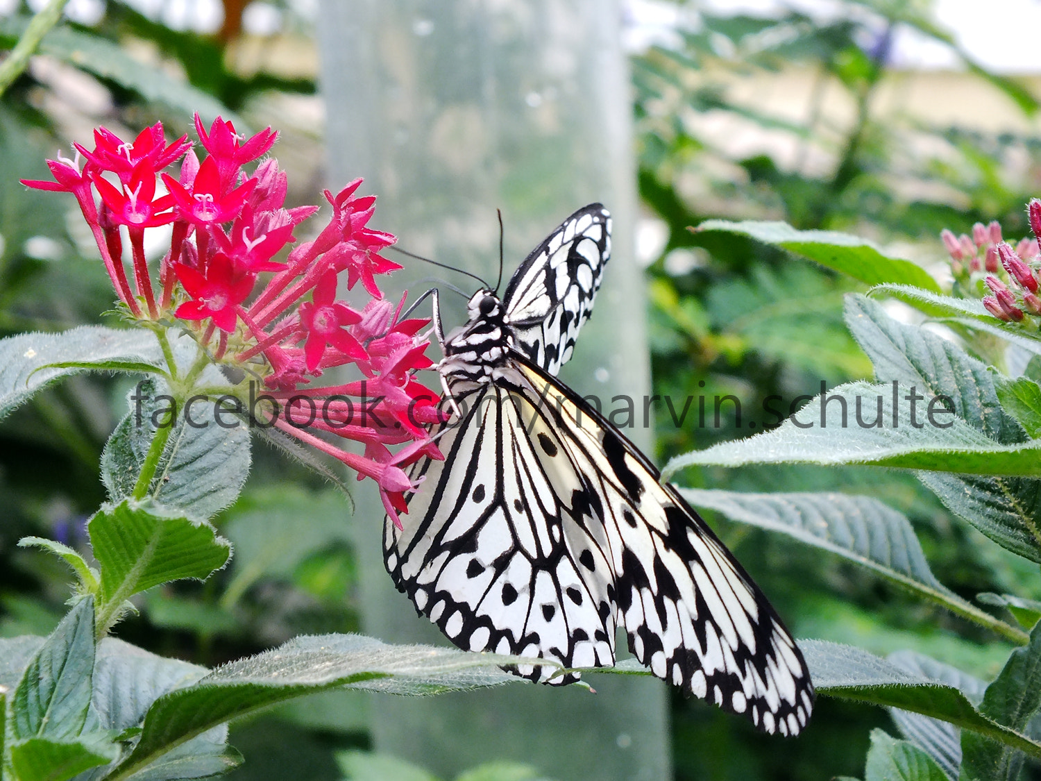 Photograph beautiful butterfly 2 by Marvin Schulte on 500px