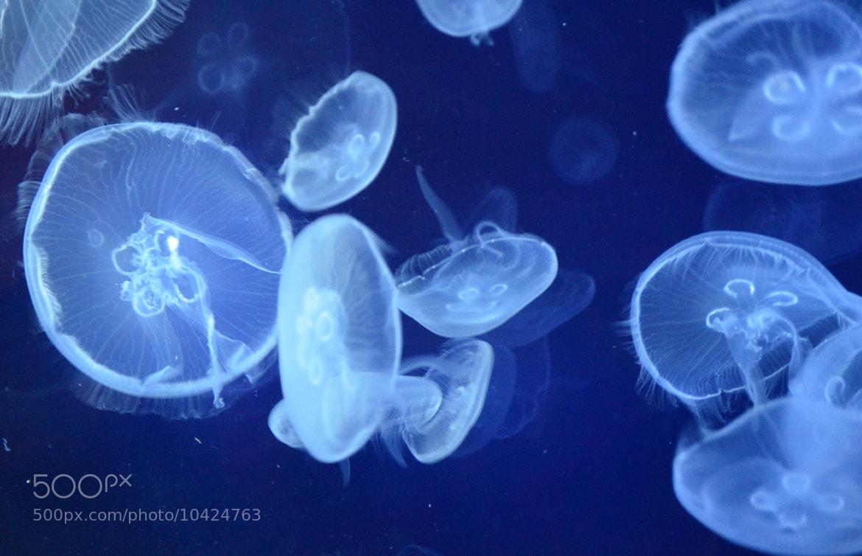 Photograph Oceanografic by Sara Vitorino on 500px