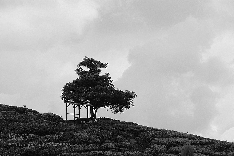 Photograph Stand Alone by Torren Danowski on 500px