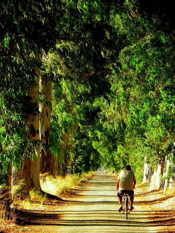 Photograph the green way by Sedat Ozdemir on 500px