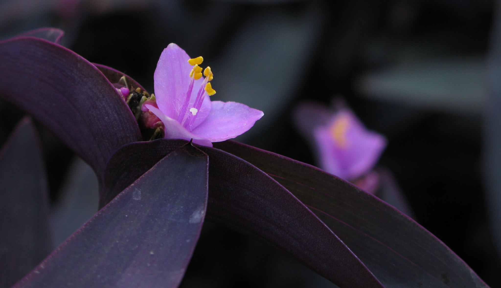 Photograph The Tiniest Purple Flower  by Brad Denny on 500px