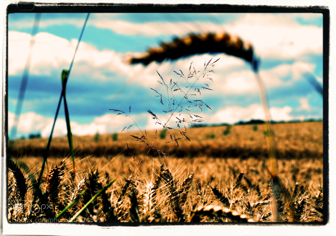 Photograph summer feeling by mel mayse on 500px