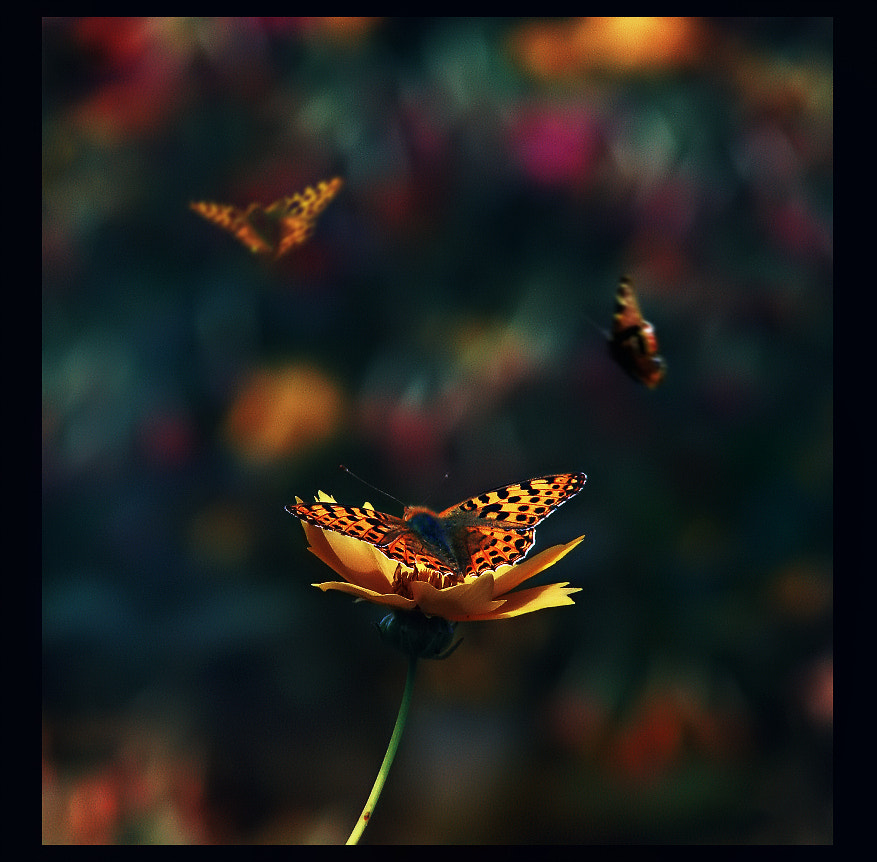 Photograph Butterfly Dream  by EMERALD WAKE © on 500px