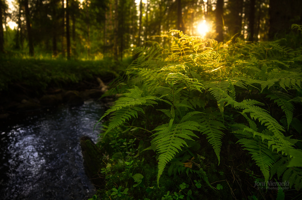 Photograph Forest Of Ferns by Joni Niemelä on 500px