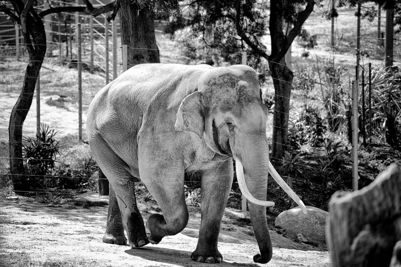 Photograph Elephant by Richard Maluyo on 500px