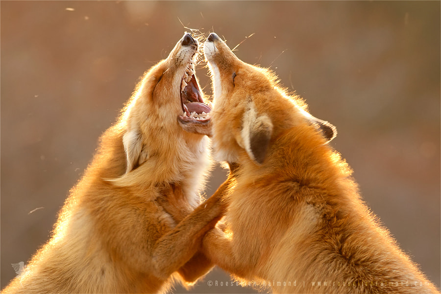 Triangle of Anger by Roeselien Raimond on 500px.com