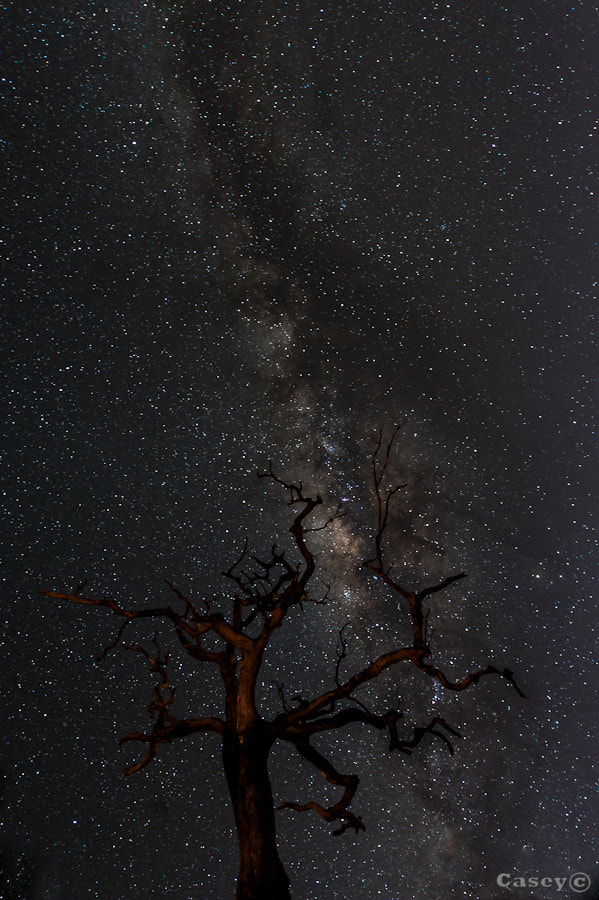 Photograph Branching out to the universe by Luke Casey on 500px