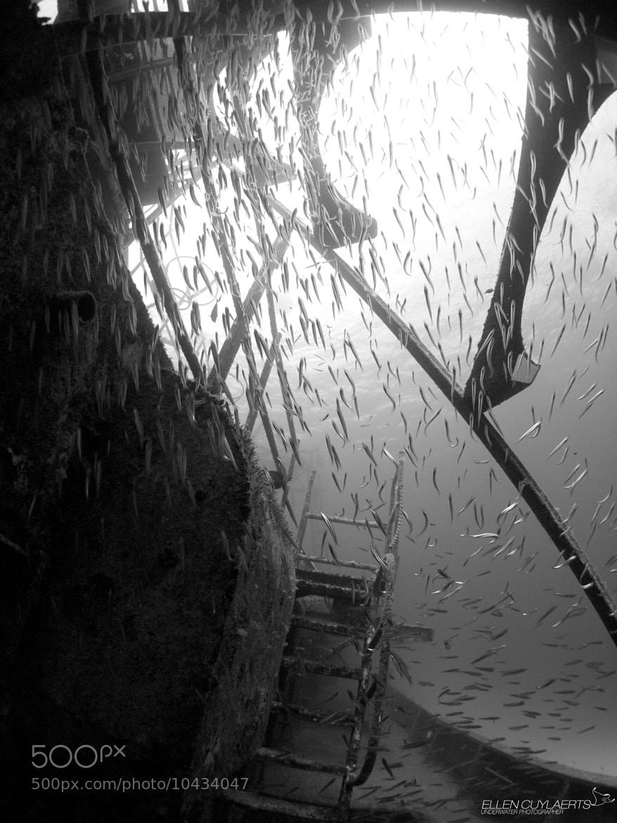 Photograph Silversides at the EX-USS Kittiwake by Ellen Cuylaerts on 500px