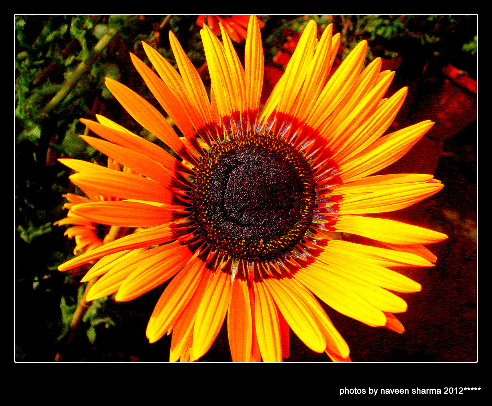 Photograph FLORAL BEAUTY by naveen sharma on 500px