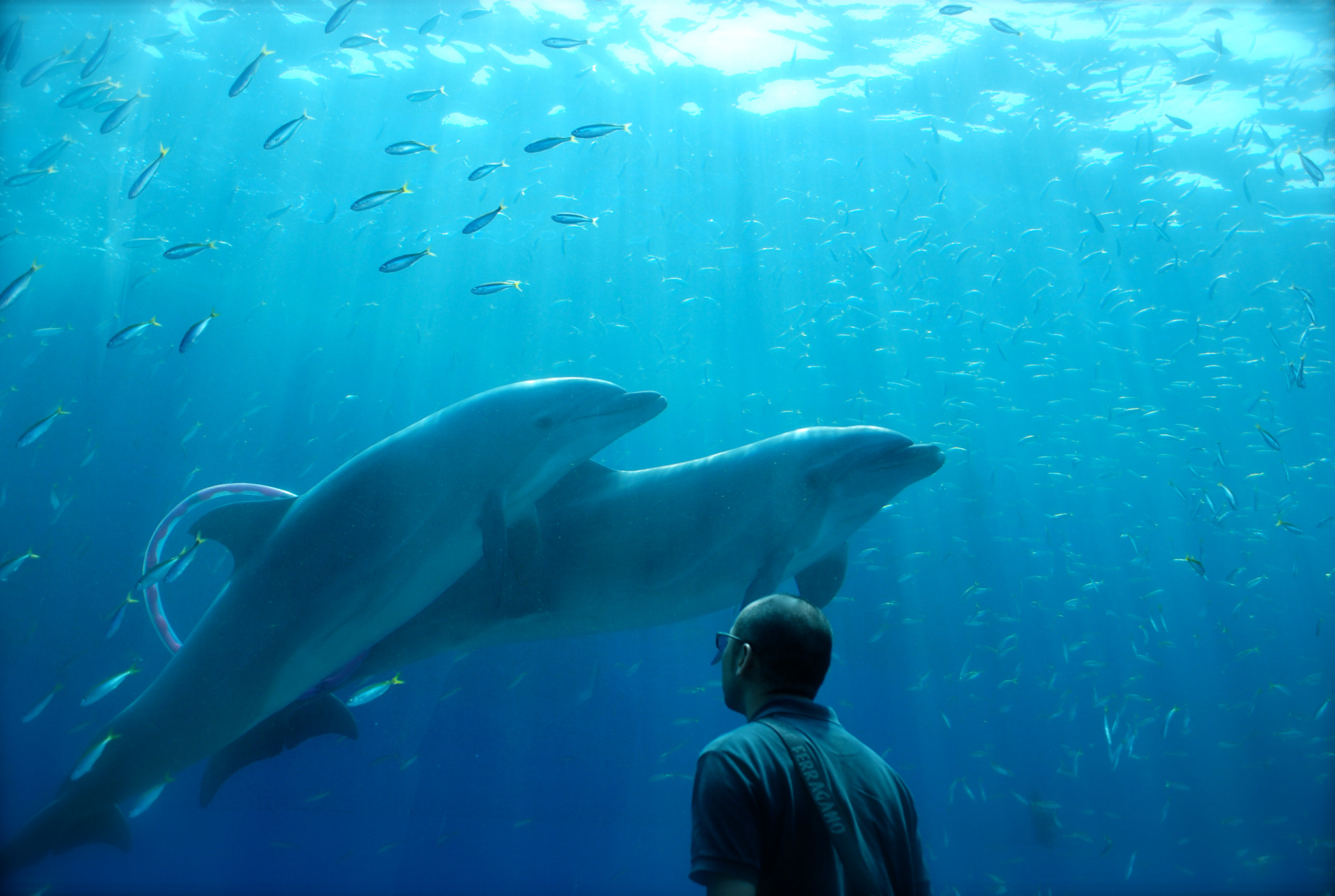 Photograph Dolphins and a man by kanae iyo on 500px