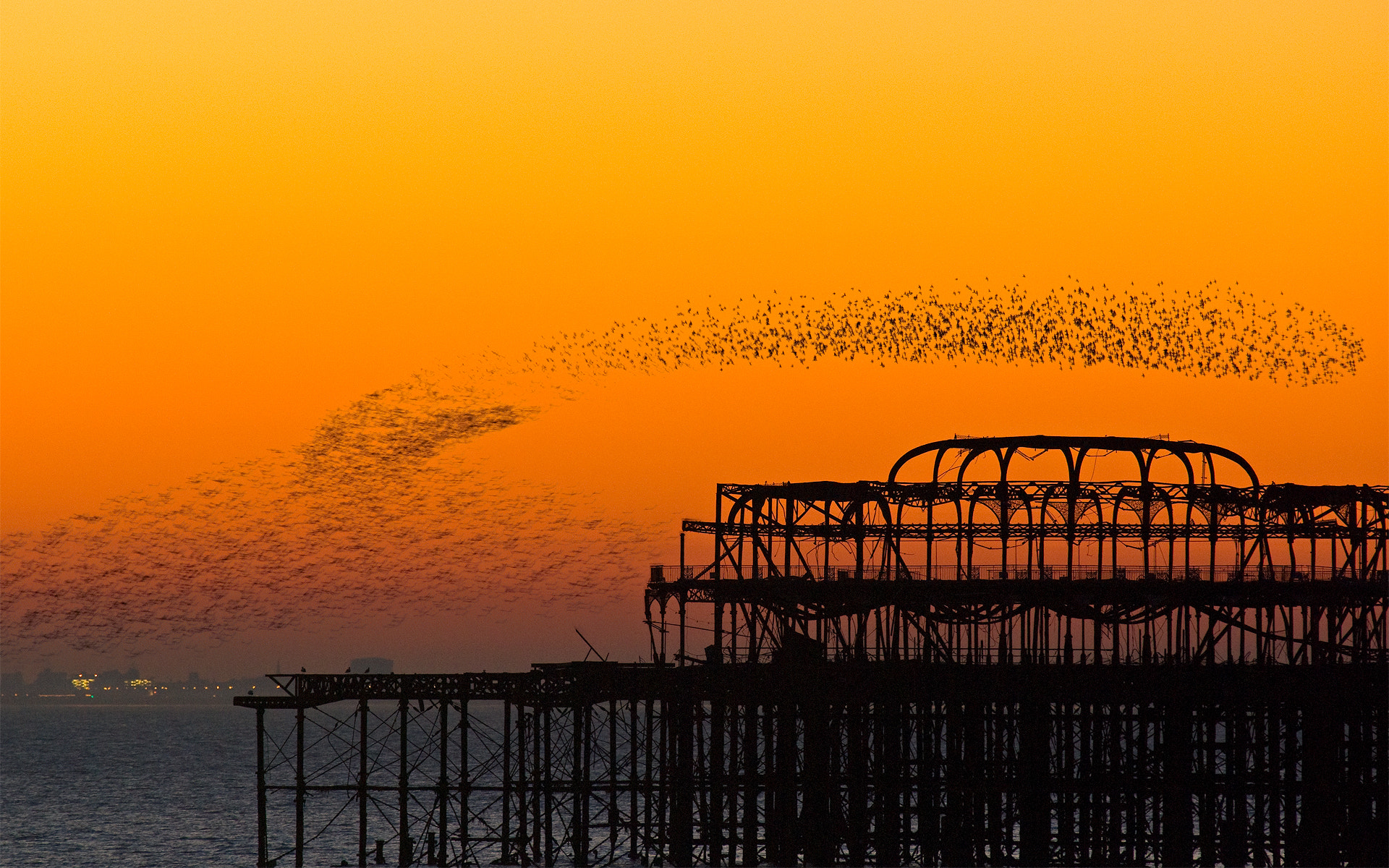 Photograph A murmuration of starlings by Neil O'Connell on 500px