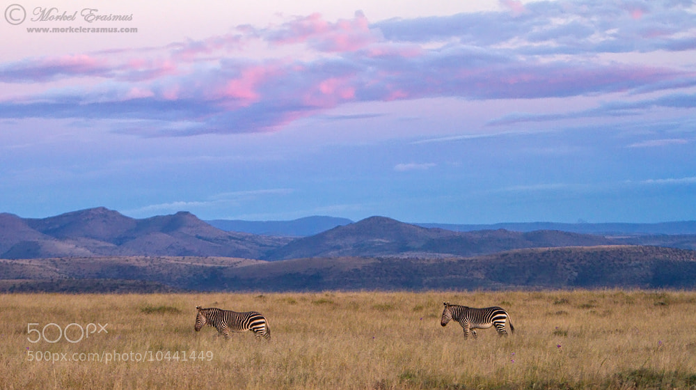 Photograph Mountains and Zebras by Morkel Erasmus on 500px