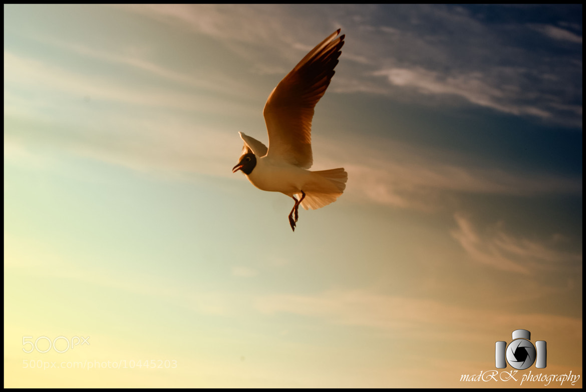 Photograph Dance while you Fly by Madhugiri Ramakanth on 500px