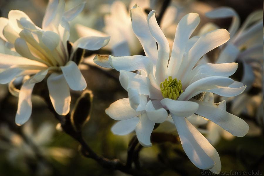 flower in bw mit texture