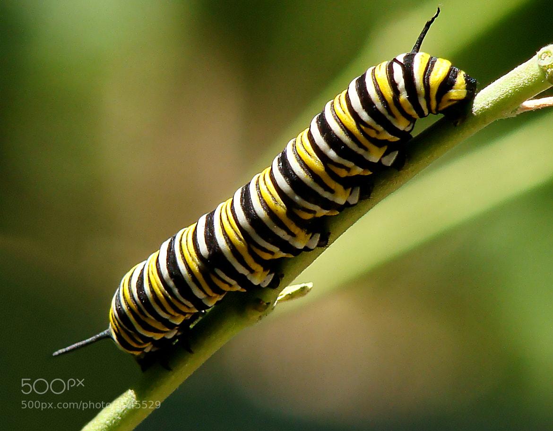 Photograph The little caterpillar by Carla Brito Ribeiro on 500px