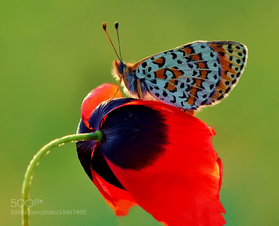 Photograph two lovers by yilmaz uslu on 500px