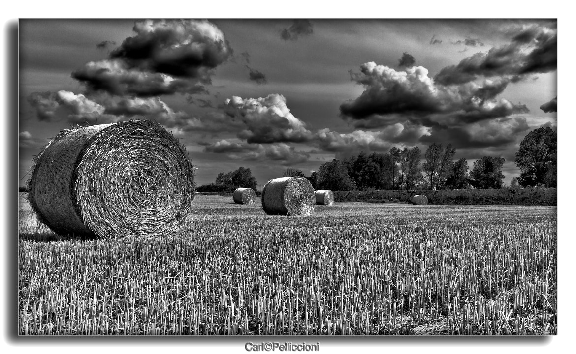 Photograph Hay bale by Carlo Pelliccioni on 500px