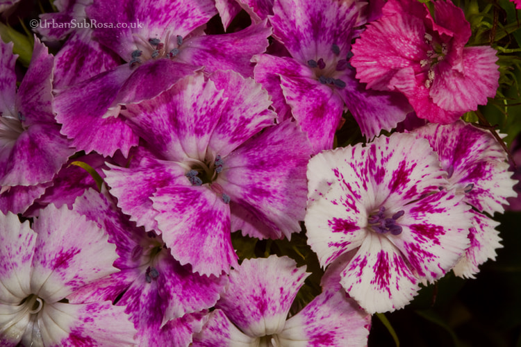 Photograph pink by Brian Sayle on 500px