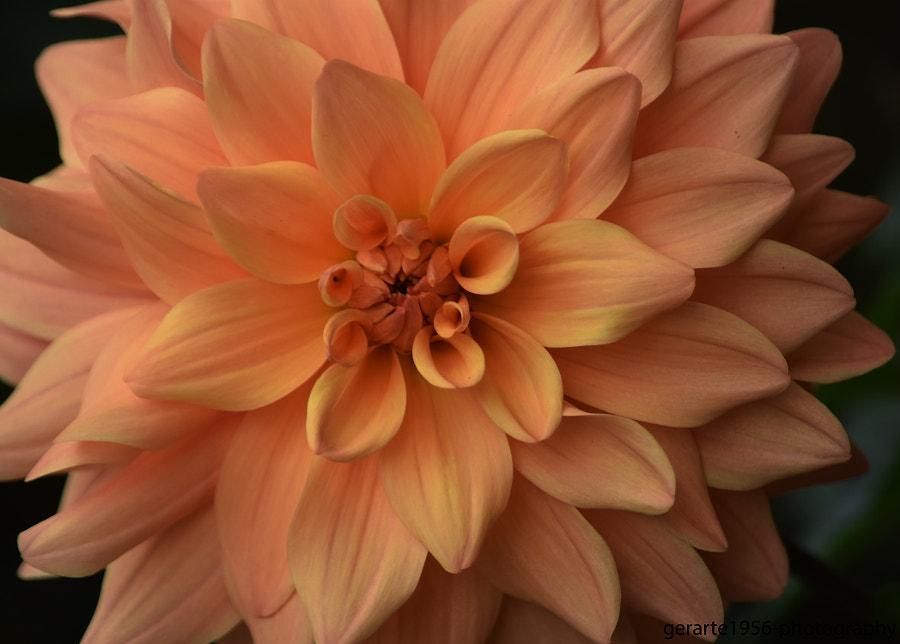 magnifique fleur... by Geraldo da Silva Filho / 500px | @500px