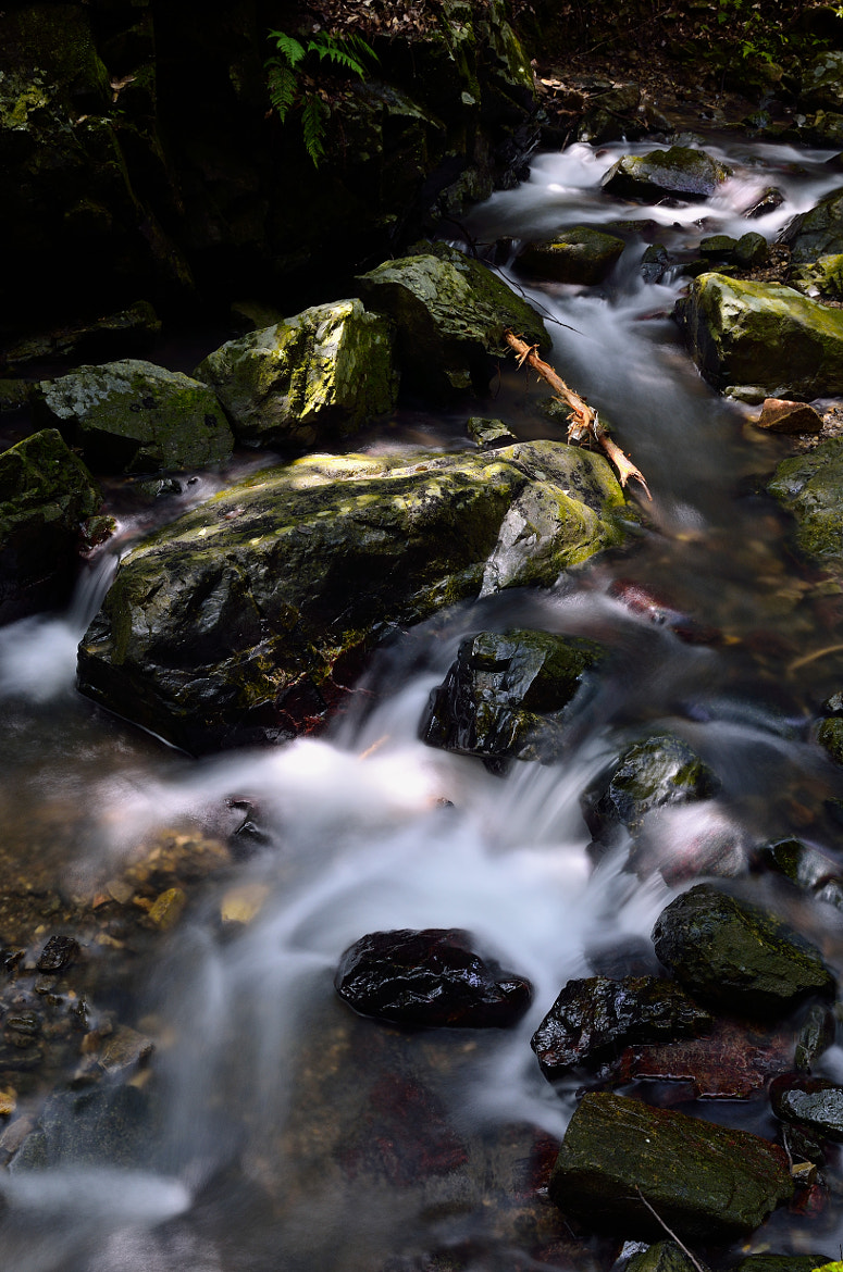 Photograph a stream in a forest by Yoshihiko Wada on 500px