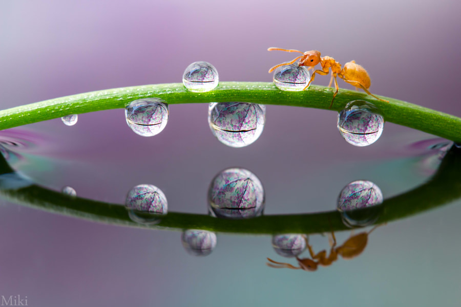 Bridge to Home by Miki Asai on 500px.com