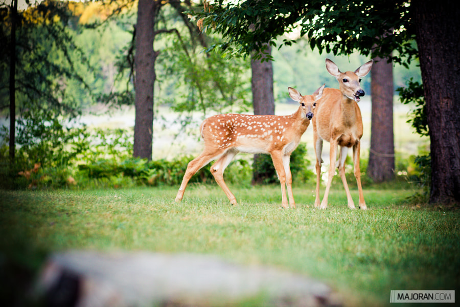 Smiling Deer and Her Fawn