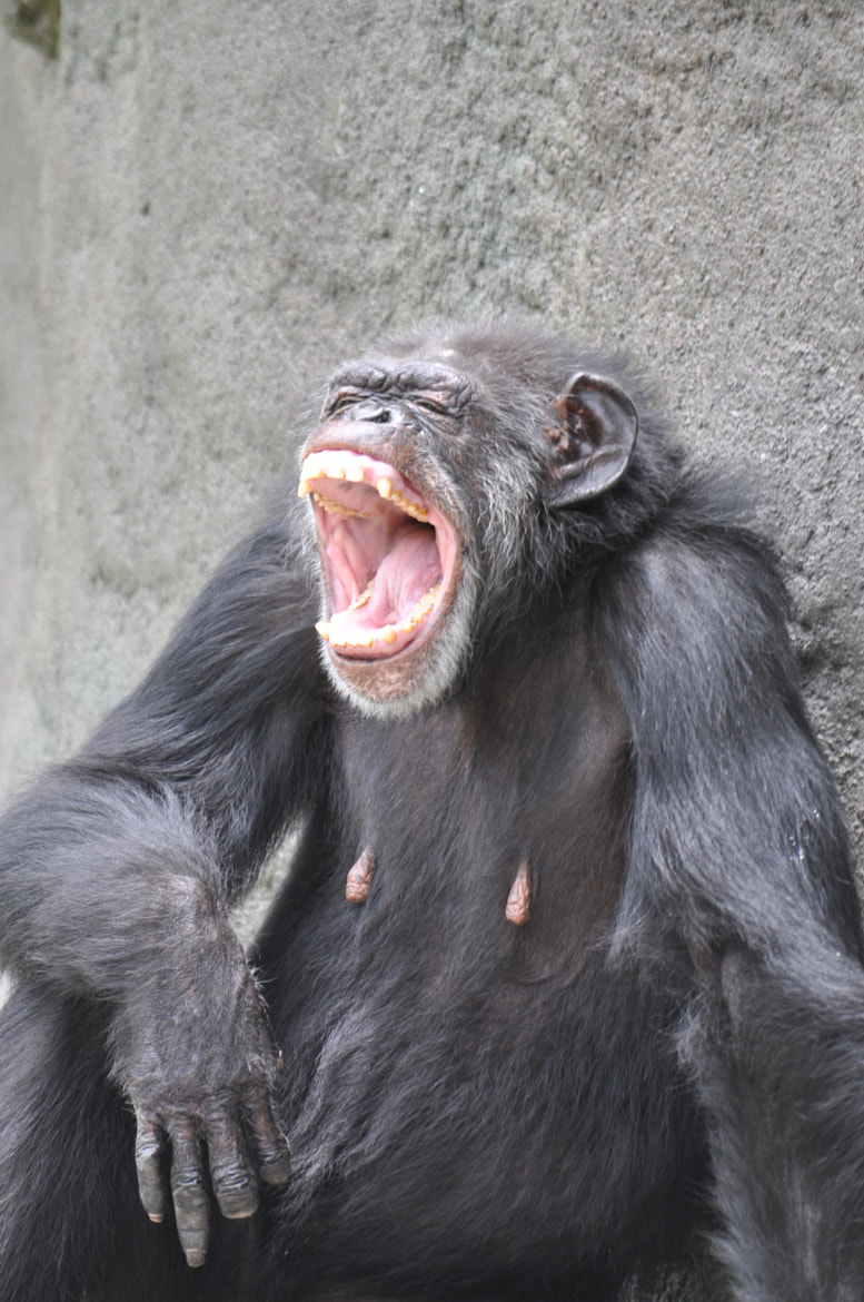 Photograph The laughing monkey by Vivian Barrios Photography on 500px