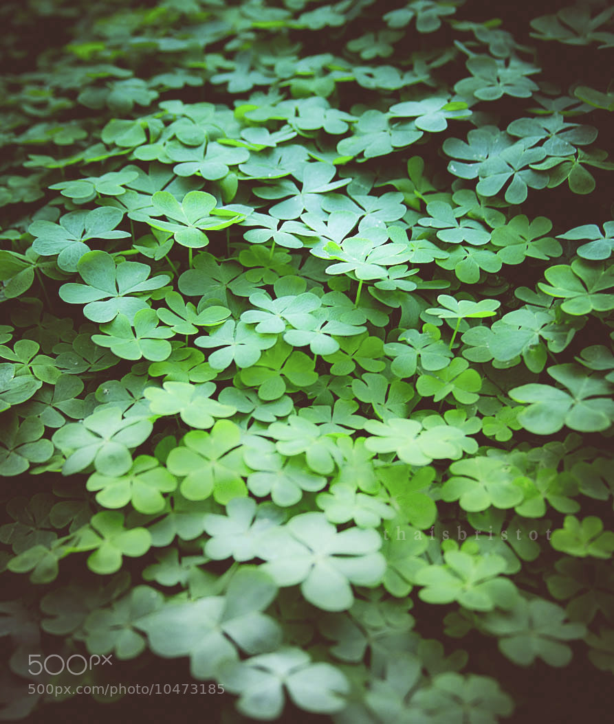 Photograph Clover Field by Thaís Bristot on 500px