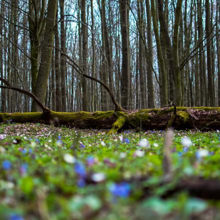 Spring in National Park Podyjí (Czech Republic)