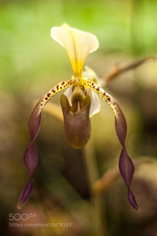 Photograph Flower by Jarques Pretorius on 500px