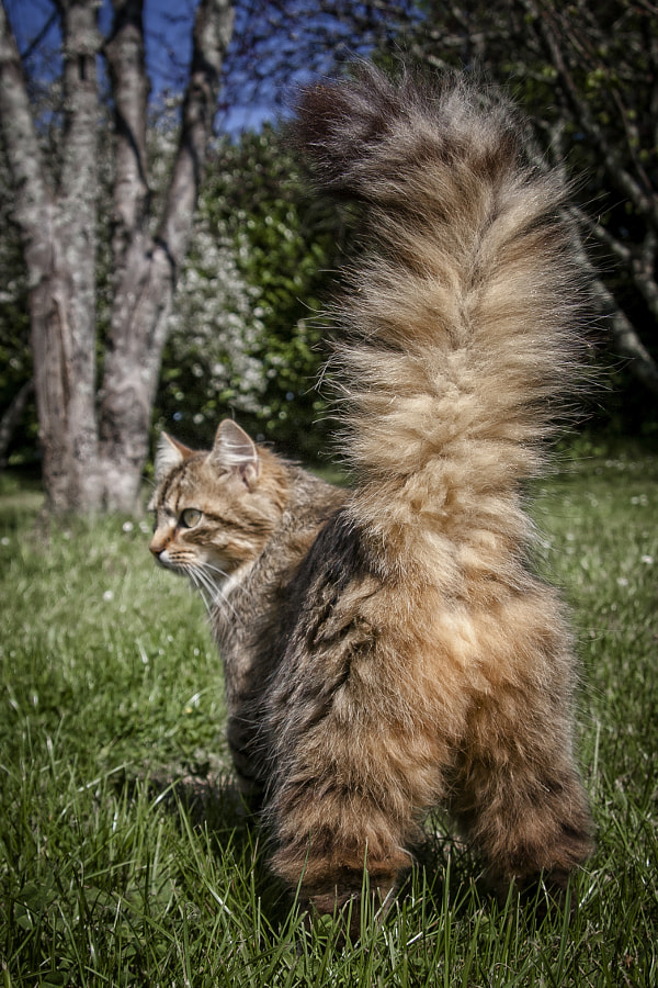 we call her : feather duster by Olivier Bigot on 500px.com