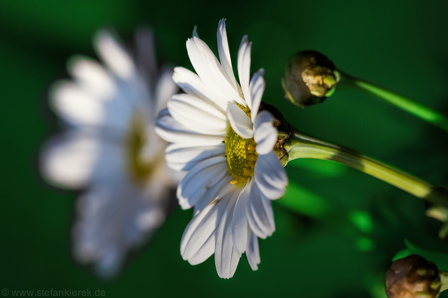 Flower in green and white