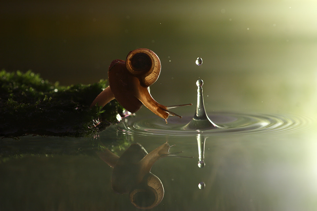 Photograph Snail and the raindrop by Vadim Trunov on 500px