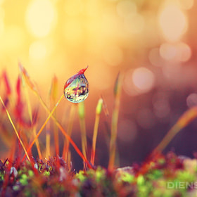 Reminds me of you by Diens Silver (diensilver)) on 500px.com