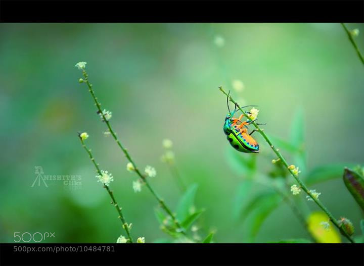 Photograph Untitled by Nishith Ramchandran on 500px